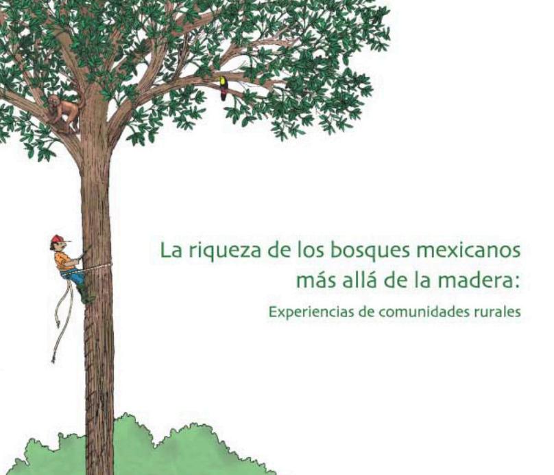 Hongos de cazahuate - Como eliminar la polilla de la madera ...