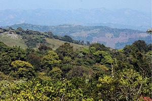deforestacion general