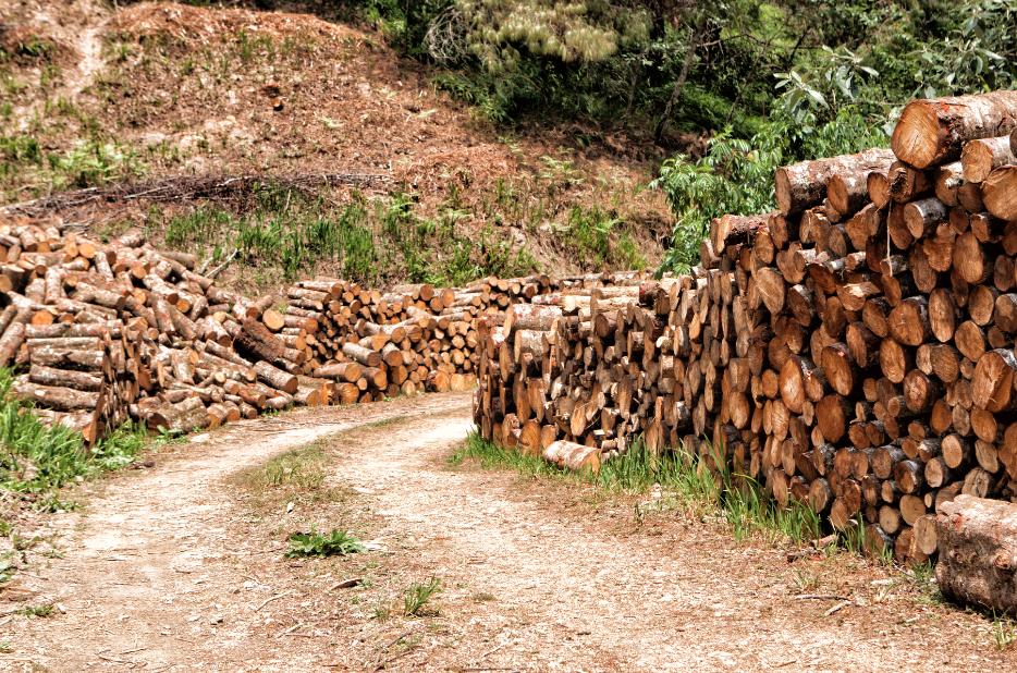 Tag archive for silvicultura consejo civil mexicano for Importancia de los viveros forestales