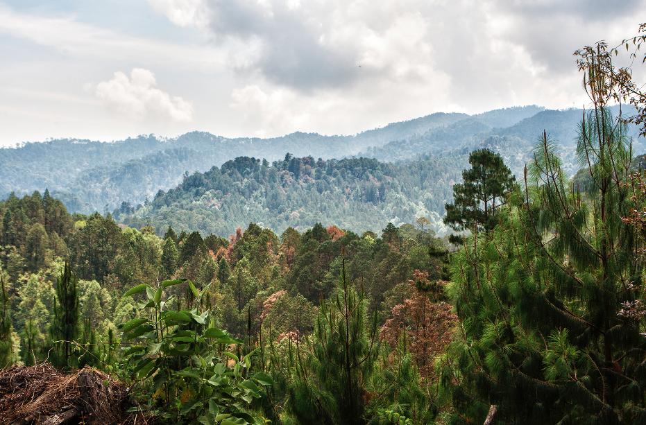 archivo ccmss-consuelo pagaza-bosques mexico- manejo forestal comunitario
