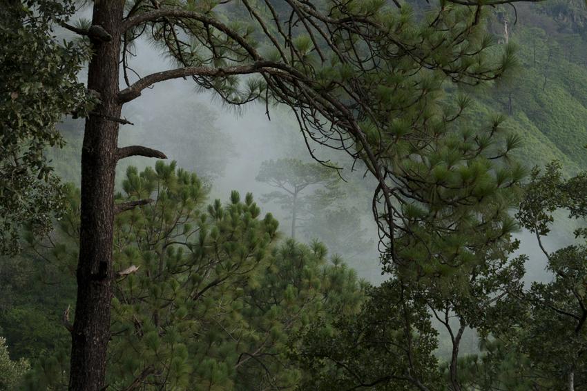 bosques mexico