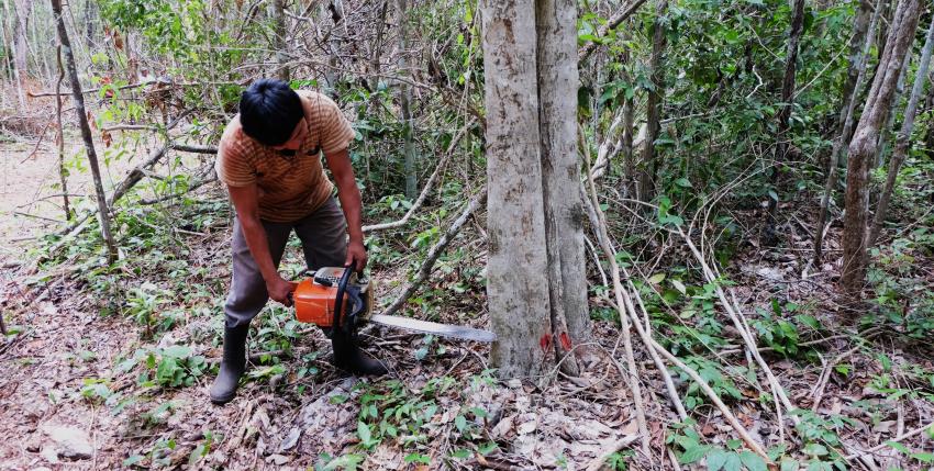 Tag archive for autorizaciones de aprovechamiento for Manejo de viveros forestales
