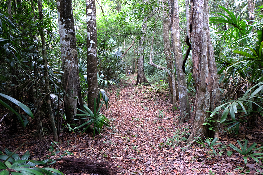 bosque_selva