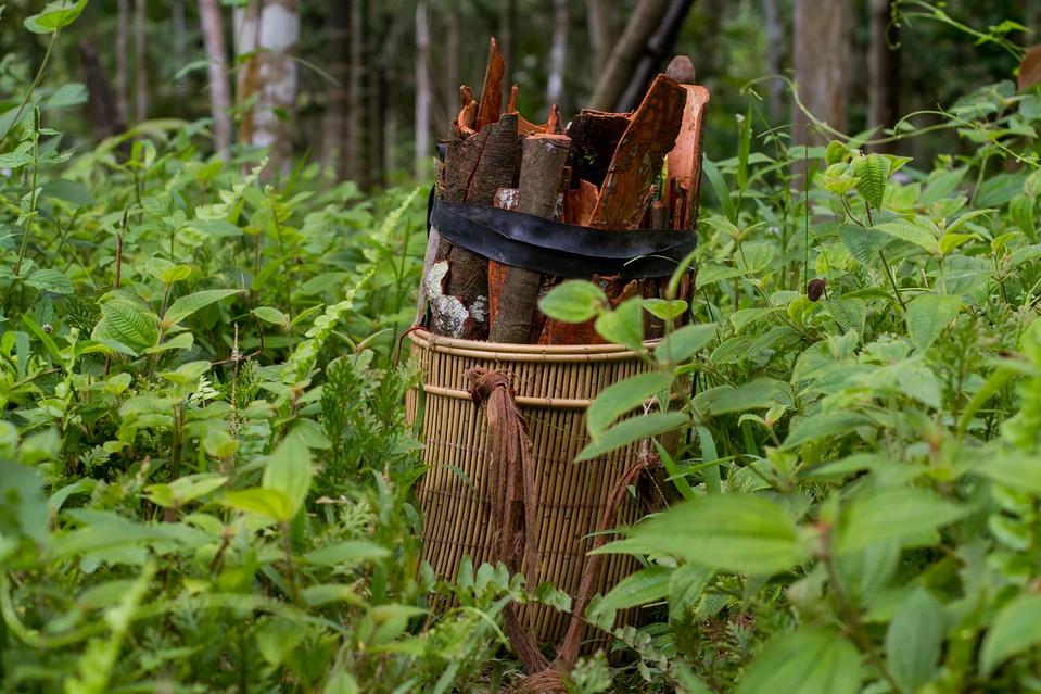 por-que-le-conviene-al-planeta-que-las-comunidades-rurales-manejen-sus-bosques