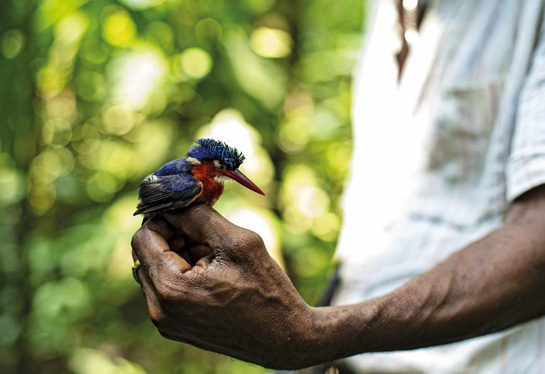 conservacion-biodiversidad-manejo-forestal-sustentable