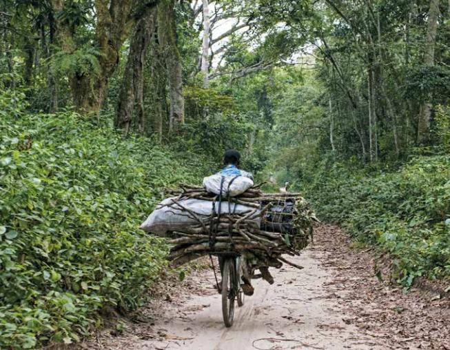 derechos-humanos-bosques