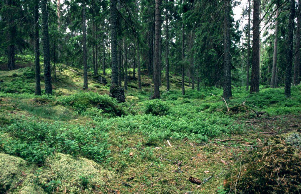 manejo-forestal-conservacion-biodiversidad