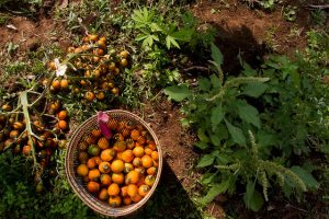 seguridad alimentaria bosques alimentación mexico