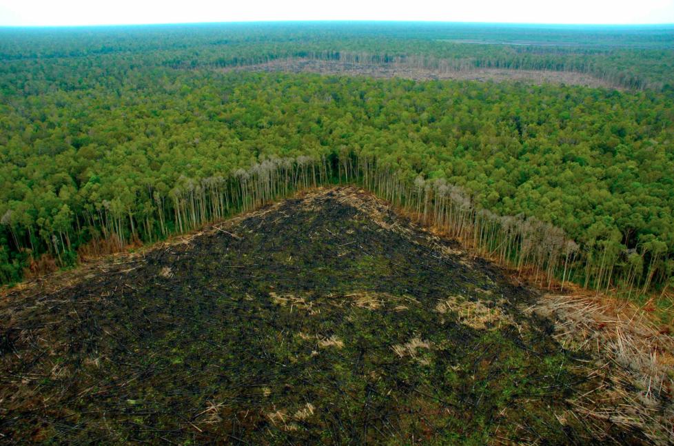 restaurar-sus-bosques-traeria-ganancias-millonarias-para-america-latina