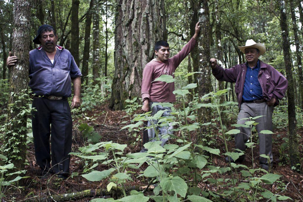 Tres-silvicultores