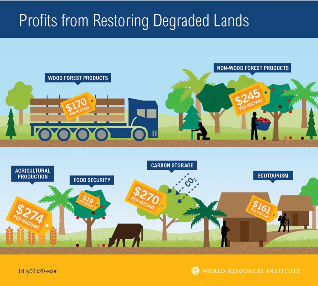 Restaurar sus bosques traería ganancias millonarias para América Latina wri
