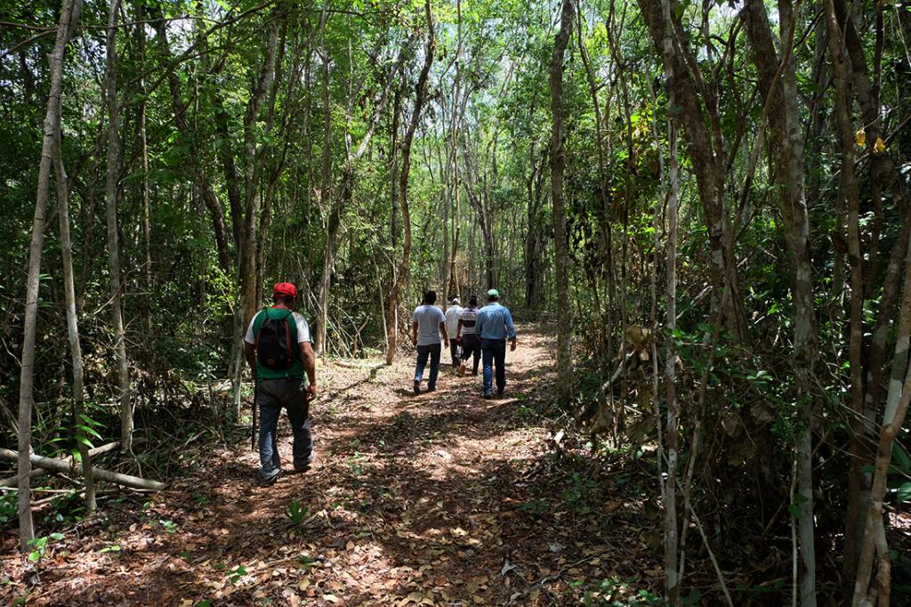 bosque_quintana_roo