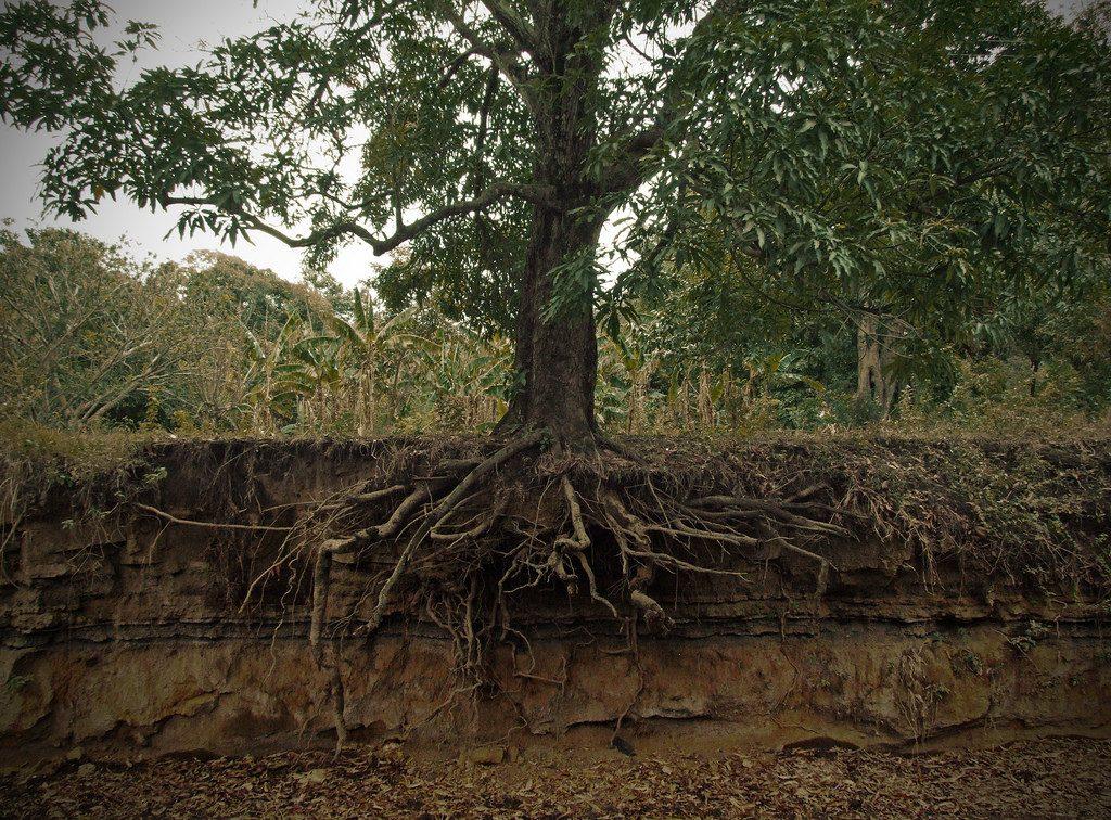 manejo forestal comunitario salvaguardas redd+ mexico