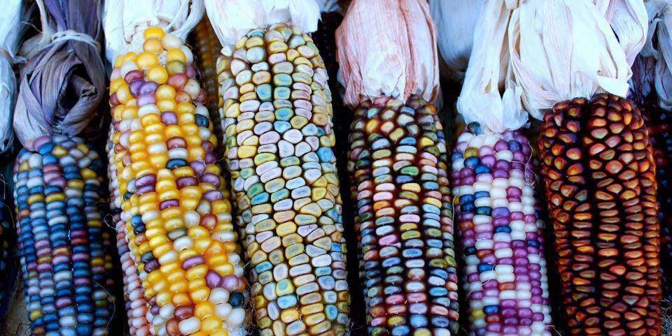 seguridad alimentaria agricultura bosques mexico