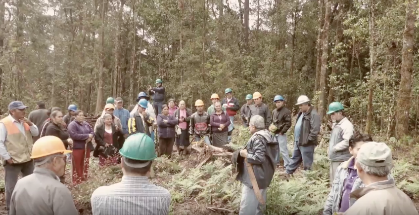 comunidades forestales mexico