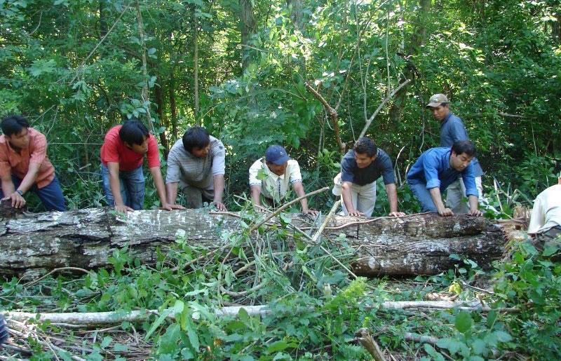 manejo-forestal-comunitario
