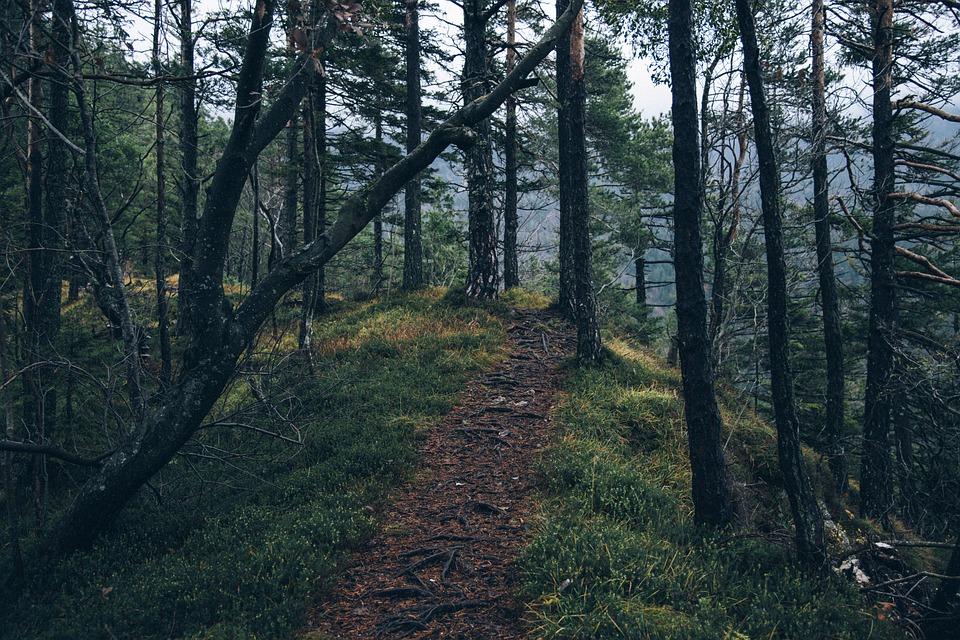Las comunidades forestales de México están listas para cuidar sus bosques ¿y luego qué?