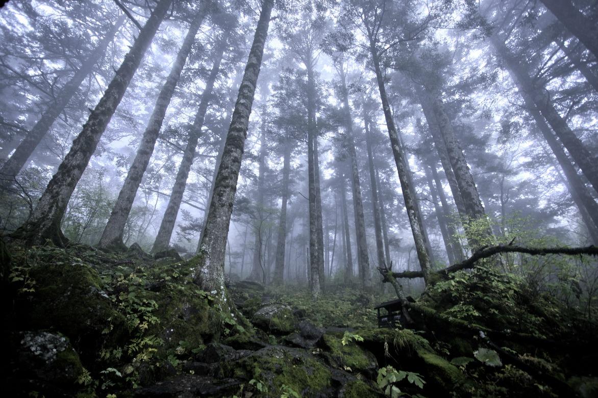 Empresa forestal pueblos mancomunados oaxaca