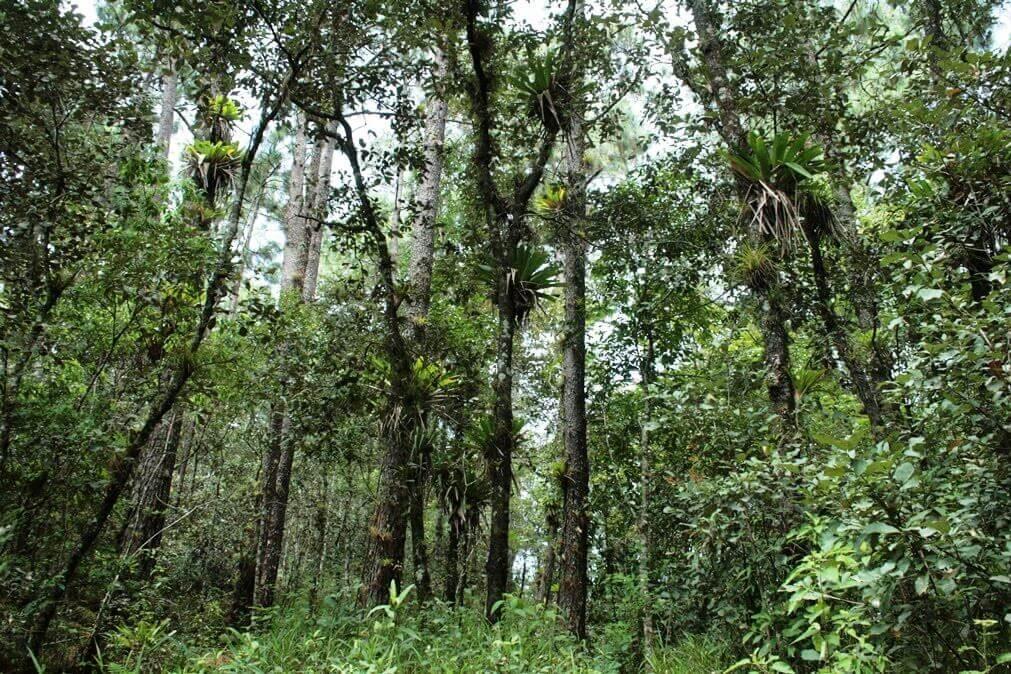 ixtlan the juarez-oaxaca-empresas forestales-pueblos mancomunados