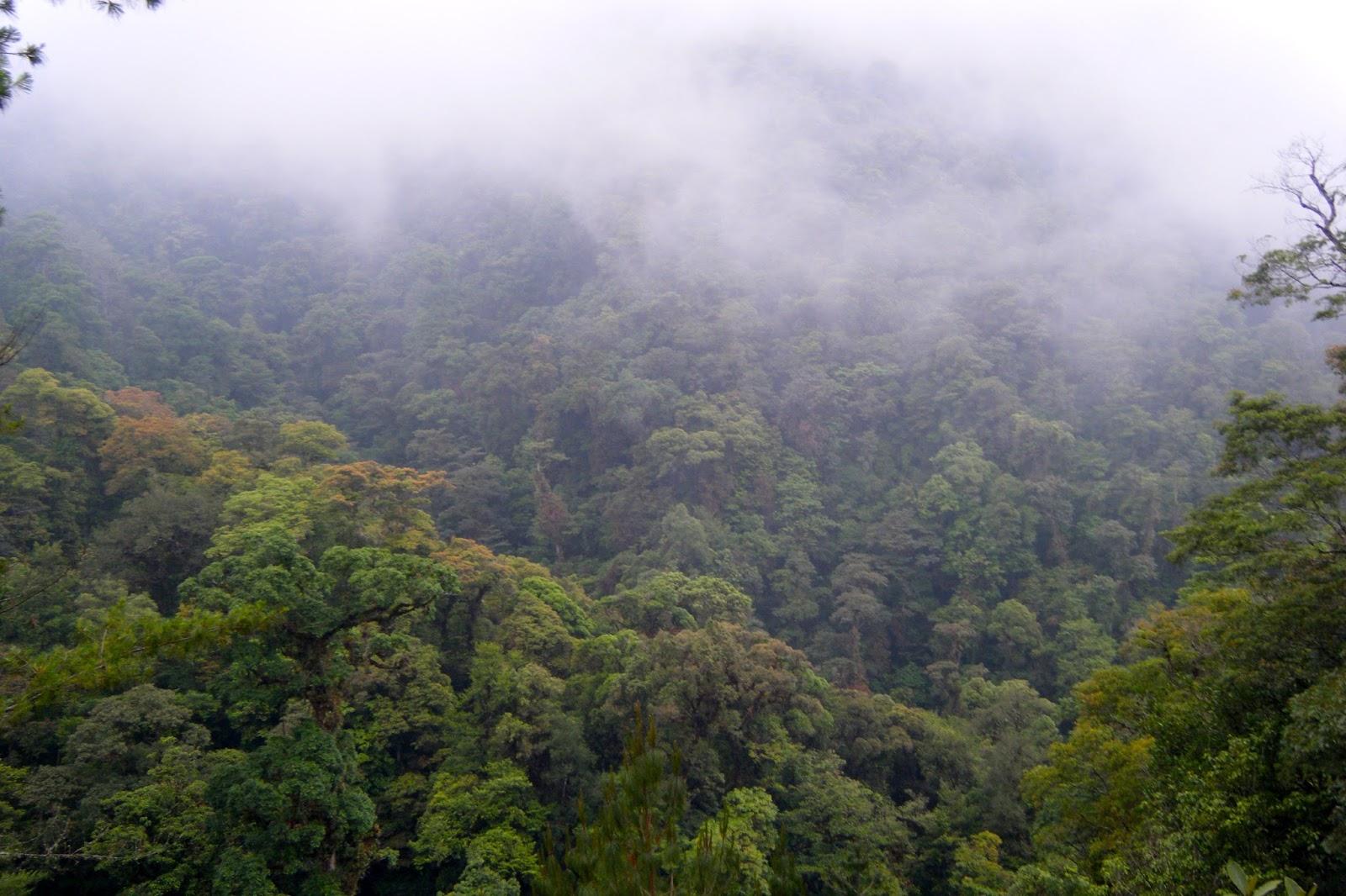 ley forestal a consulta firma peticion bosques mexico