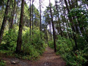 manejo forestal comunitario