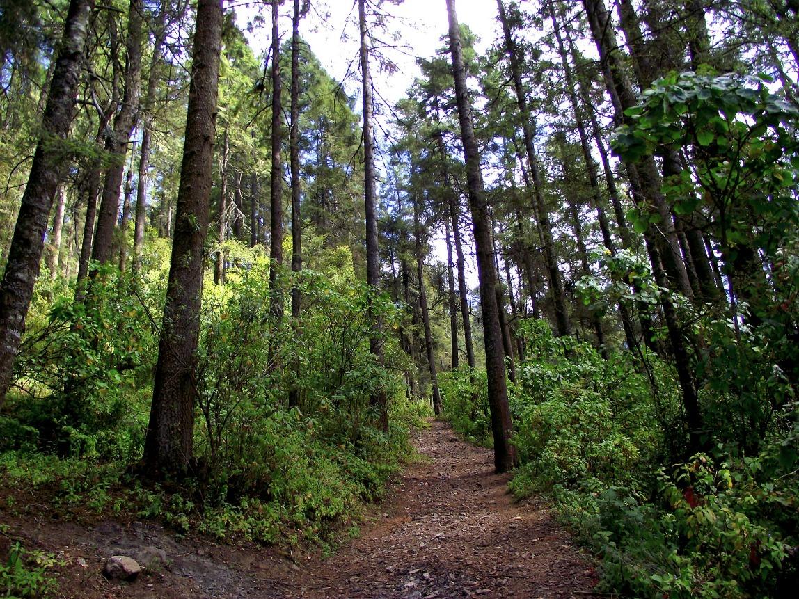 ley forestal consulta firmas senado mexico