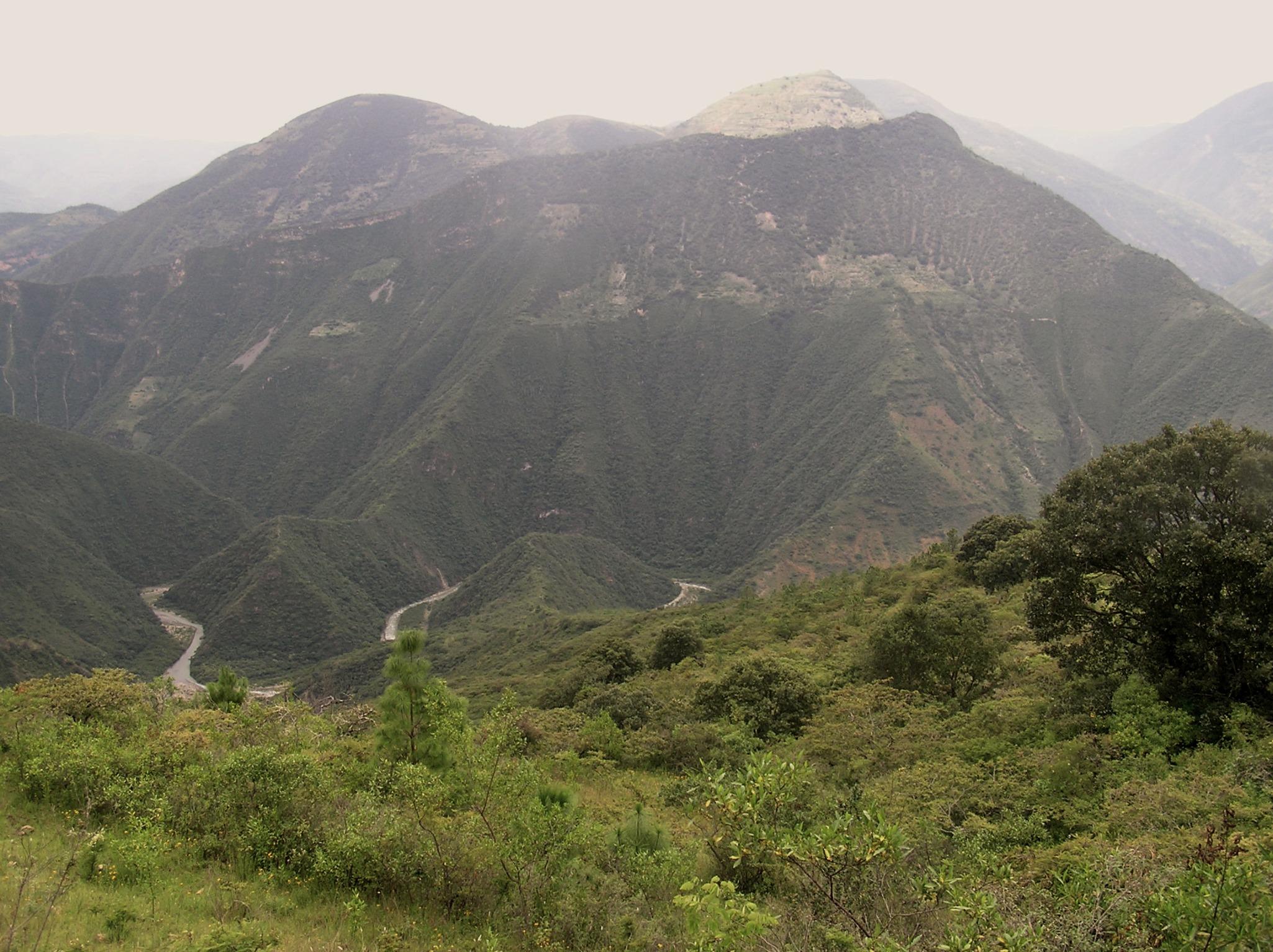 Analco-oaxaca-certificacion forestal-productos forestales certificados-manejo forestal comunitario-mexico