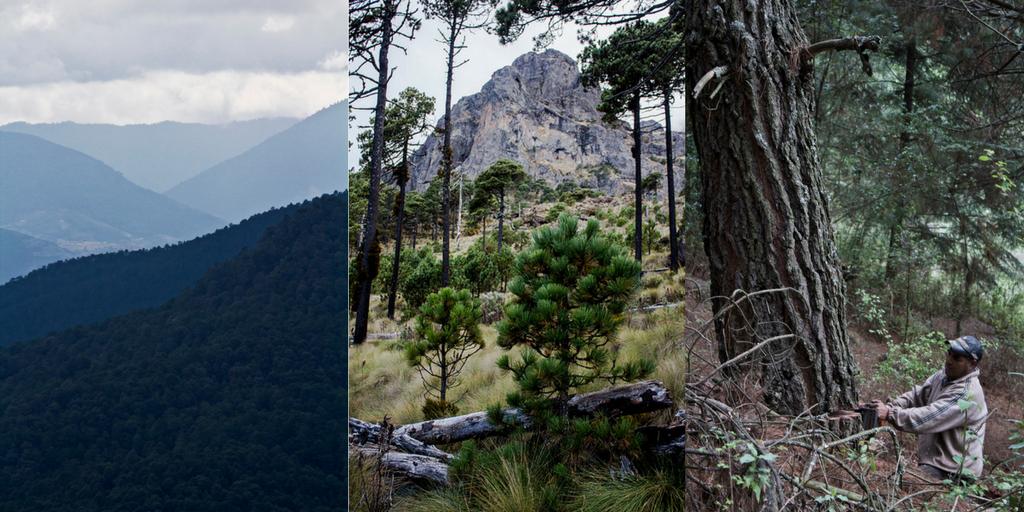 archivo ccmss-bosque-manejo forestal comunitario
