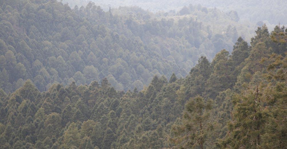 bosques-mexico-michoacan