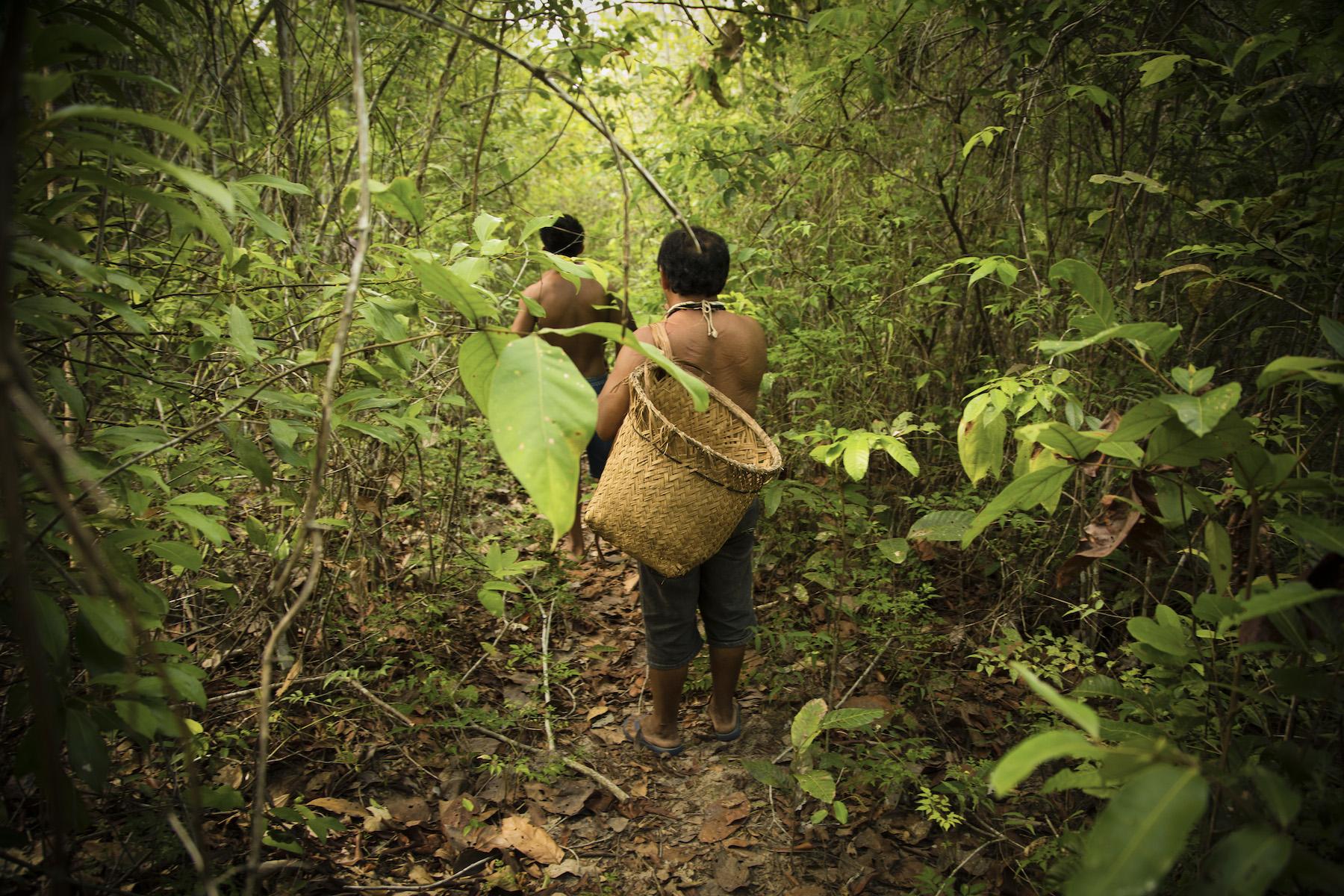 80 por ciento de la biodiversidad del planeta esta resguardada por pueblos indigenas