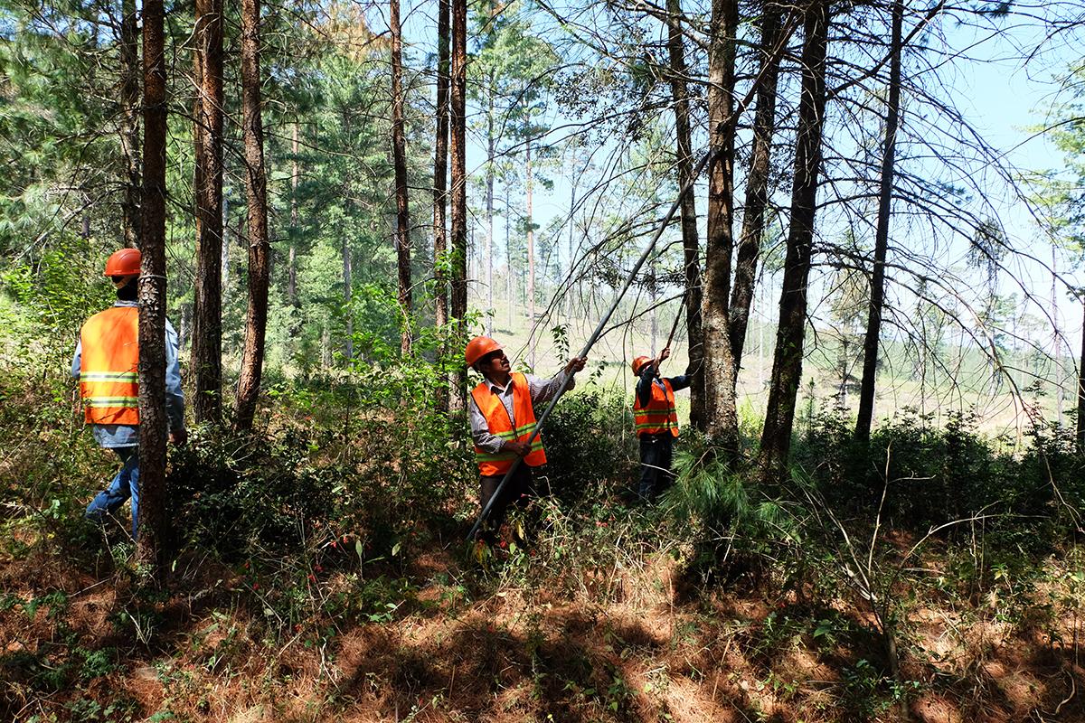 Aprovechamiento forestal y restauración de suelos - En Acolihuia, Puebla, los ejidatarios trabajan en labores de restauración de suelos que fueron degradados por un pastoreo intensivo.