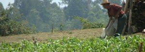 Cuenca Amanalco Valle de bravo CCMSS Consejo Civil Mexicano para la Silvicultura Sostenible