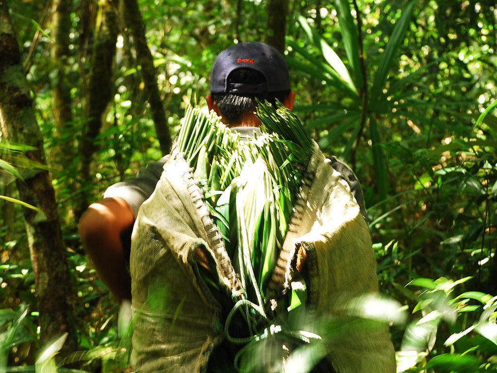 Peten ACOFOP Guatemala manejo forestal comunidades indigenas