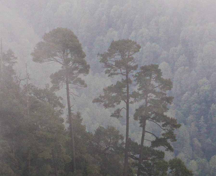 bosques de mexico amanalco valle de bravo-CCMSS