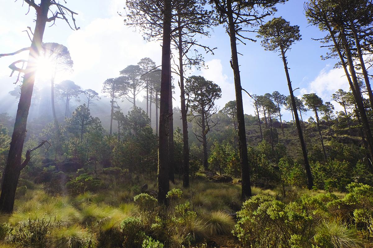 Comunidades recuperan el bosque del Cofre de Perote y dotan de agua a la region