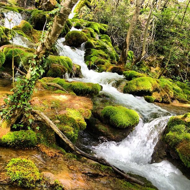 importancia del manejo forestal comunitario para garantizar el agua