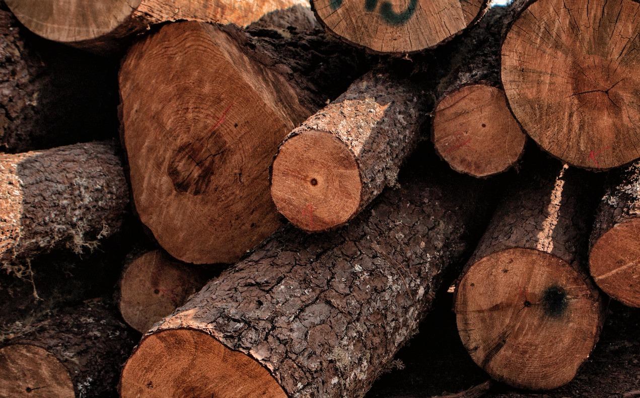 Directorio de comunidades en México que venden madera certificada Empresas Forestales Comunitarias Mexico sustentabilidad bosques