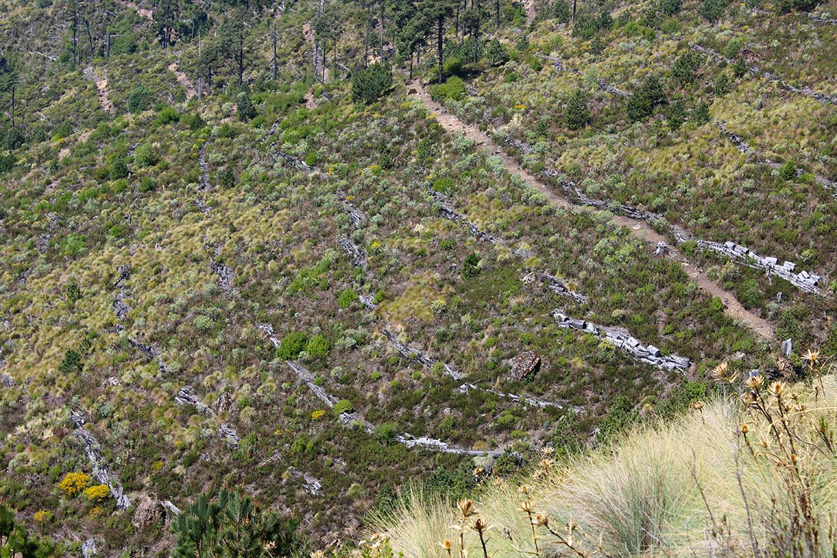 En el Cofre de Perote, Veracruz, las comunidades y ejidos de las faldas de este Parque Nacional han trabajado en la restauración de más de 2,500 hectáreas que fueron siniestradas por un incendio ocurrido en 1998.