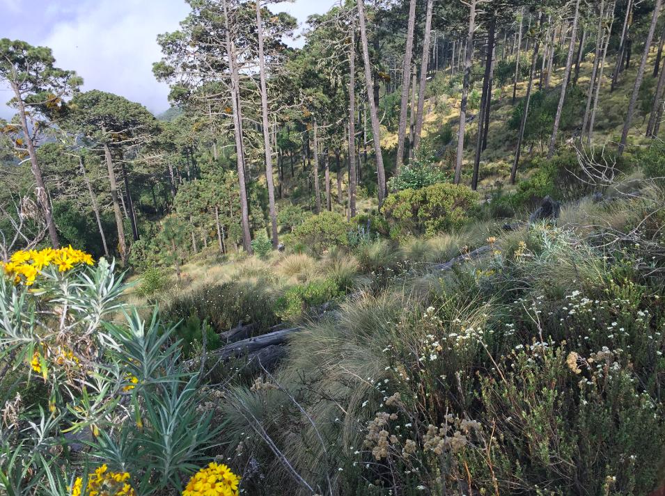 Archivo CCMSS-bosques de veracruz bosque mesofilo de montaña mexico