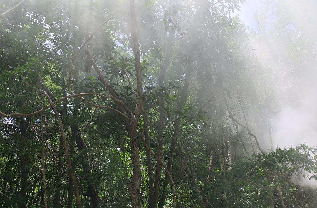 Archivo.CCMSS-peninsula de yucatan-manejo forestal comunitario