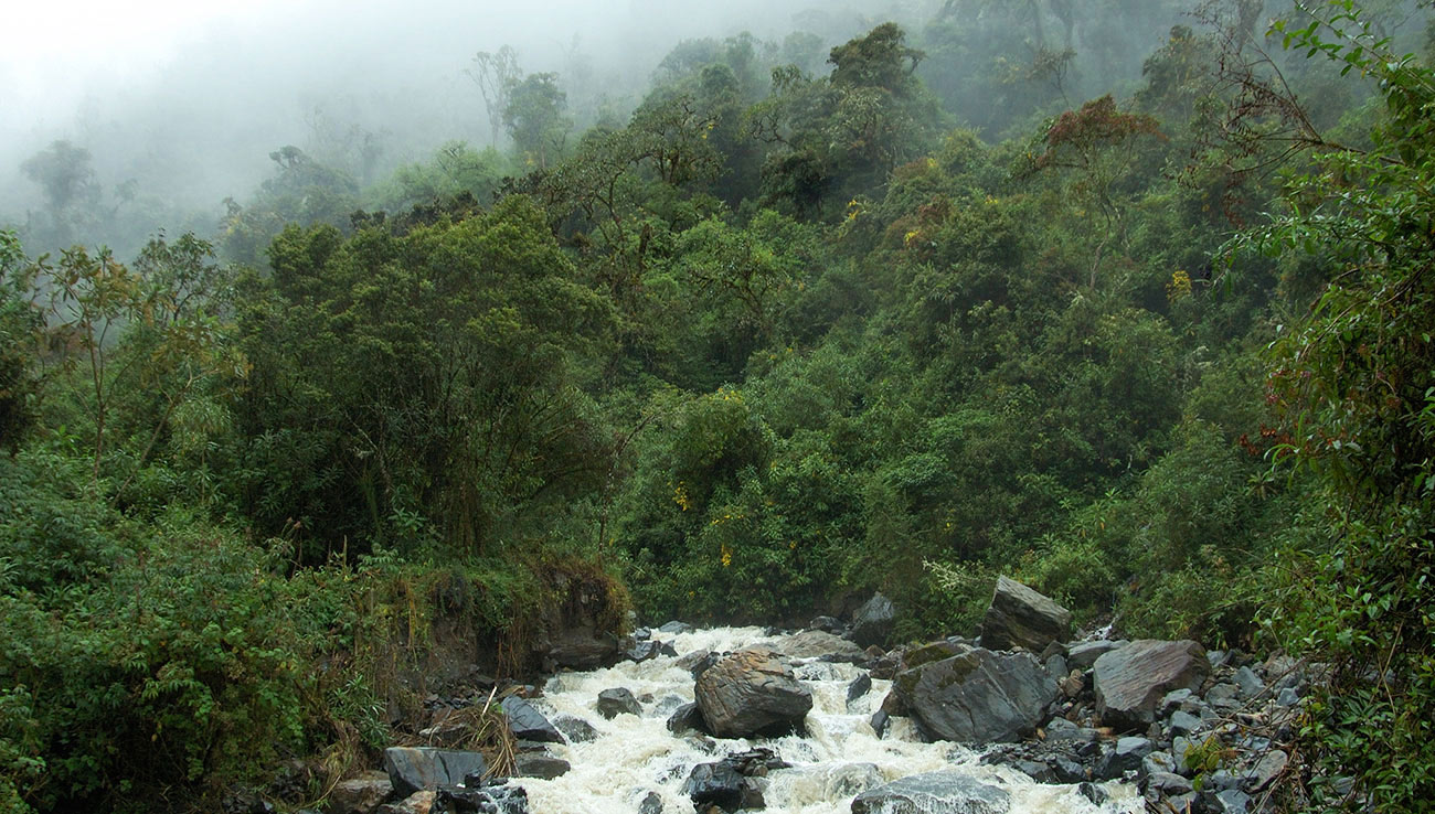 bosques-agua-fuente-manantiales