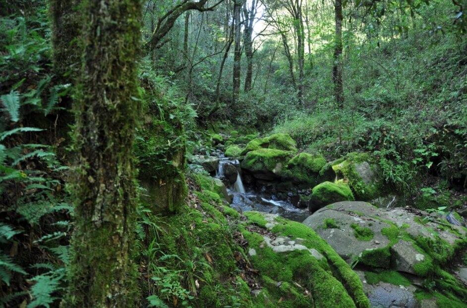 bosques-en-mexico-rios-manantiales-agua