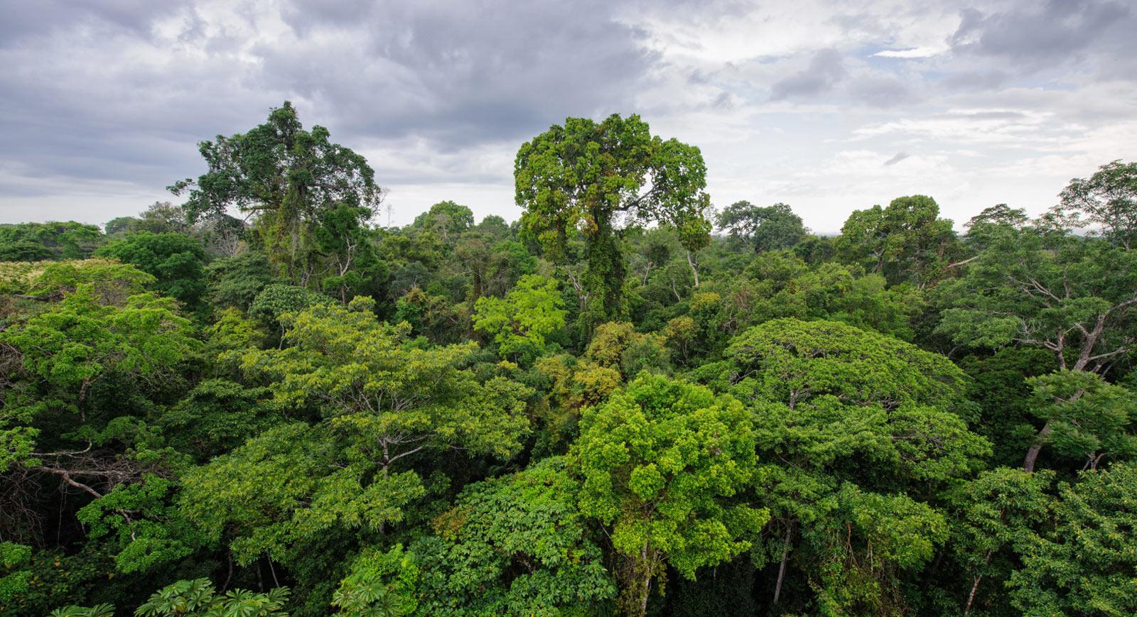 selva-peru-amazonas-deforestacion-indigenas