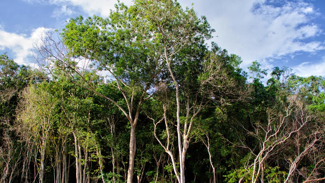 Recuperar tejido social y detener deforestacion manejo forestal comunitario sustentabilidad Mexico