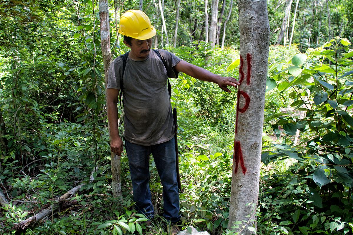 Recuperar tejido social y detener deforestación manejo forestal comunitario sustentabilidad México