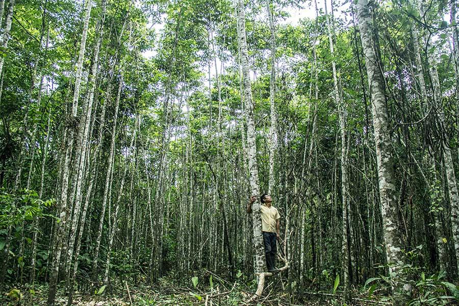 derecho-tierra-indigenas-bosques-defensa-territorio-comunidades