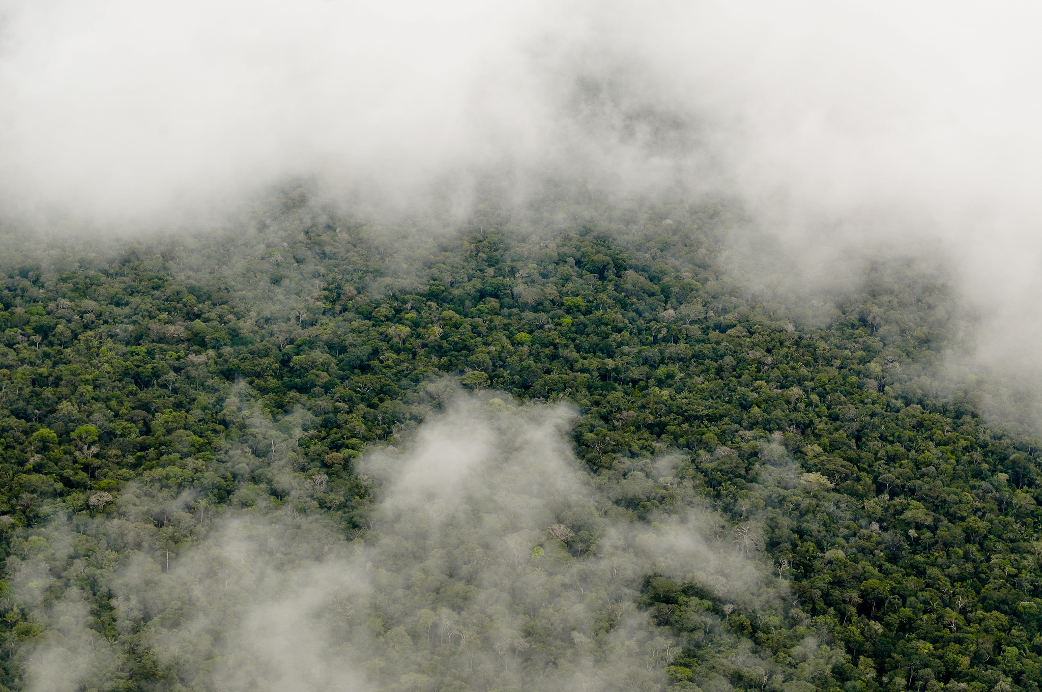 CIFOR CC-millones de dolares en beneficios bosques conservados comunidade sindigenas america latina