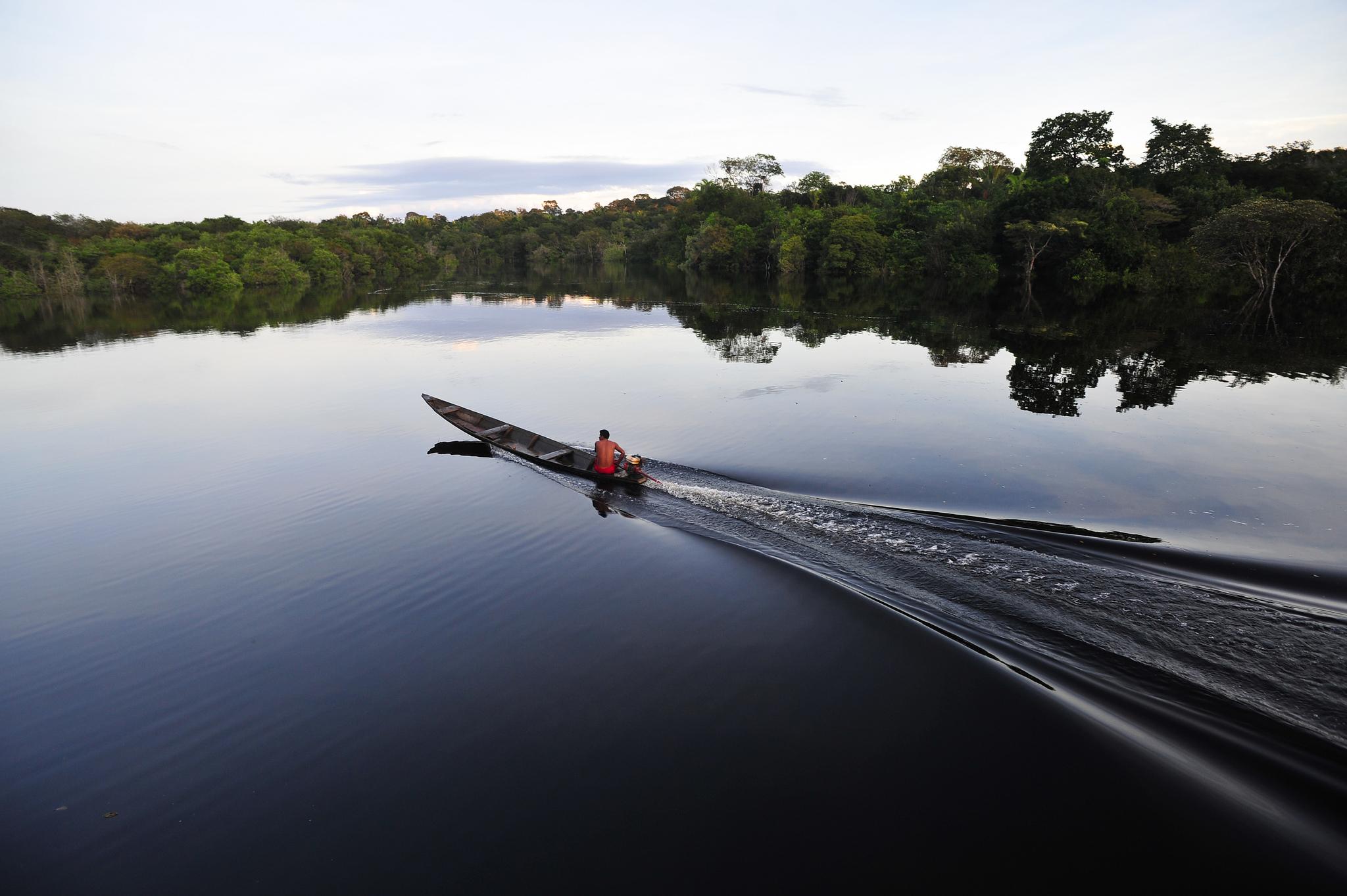 derechos-a-la-tierra-comunidades-pueblos-indigenas-bosques-millones-dolares-america-latina-