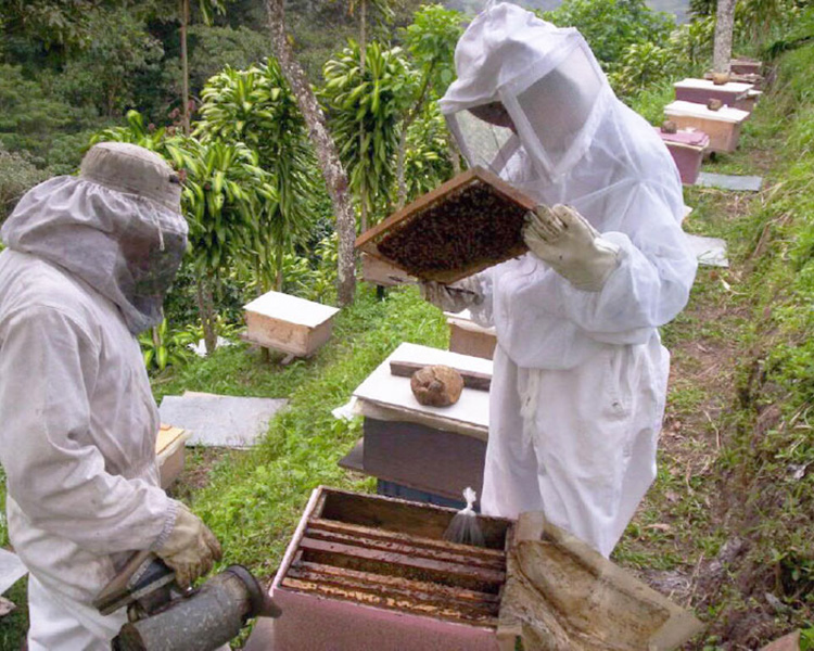 apicultura-peninsula-yucatan-sostenible