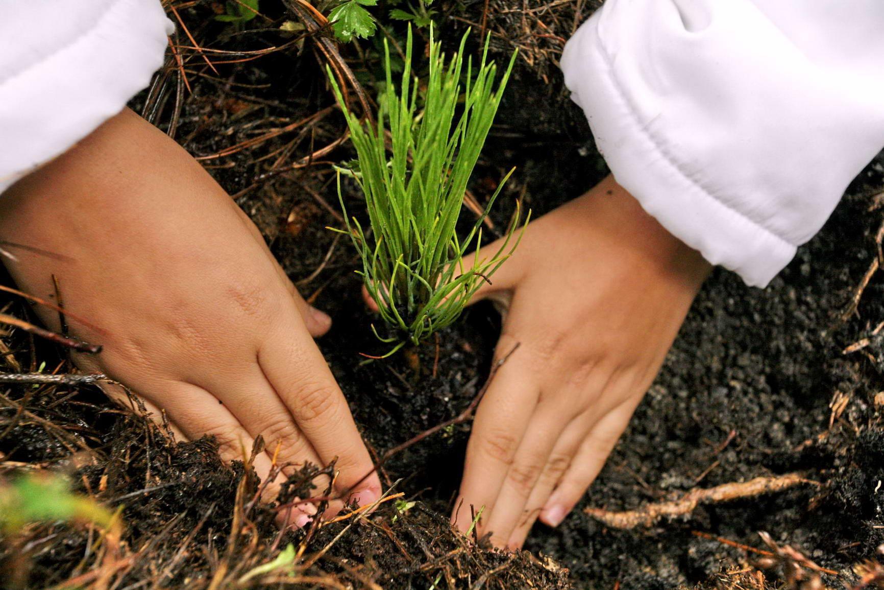 reforestacion-restauracion-bosque-comunidades